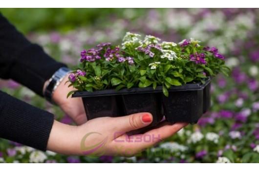 Делаем рассаду: какие цветы высеивать первыми?