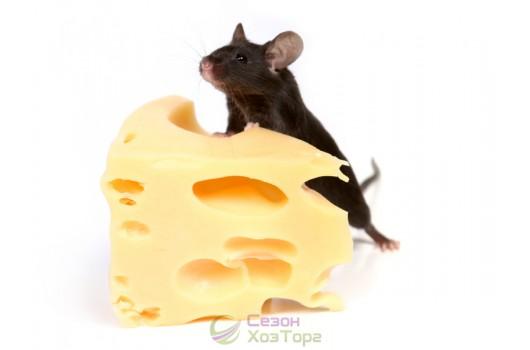 Как избавиться от мышей - народные средства борьбы с грызунами