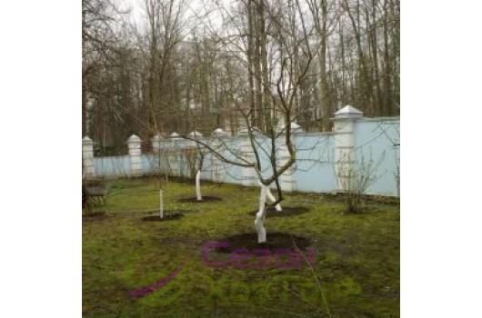 Особенности обрезки деревьев осенью