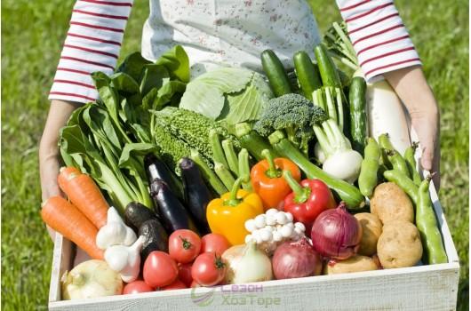 Полив сада и огорода - как, когда и чем лучше поливать для хорошего урожая