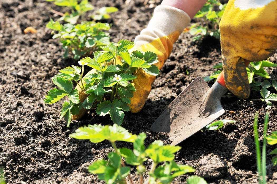 как подготовить землю в теплице